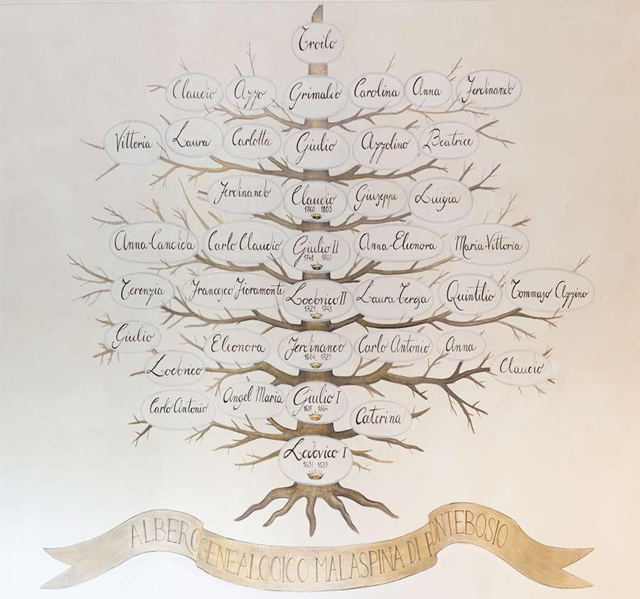 albero genealogico Malaspina